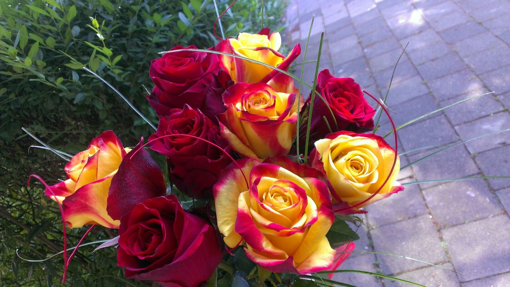 #rose 🌹 Summer 2016.