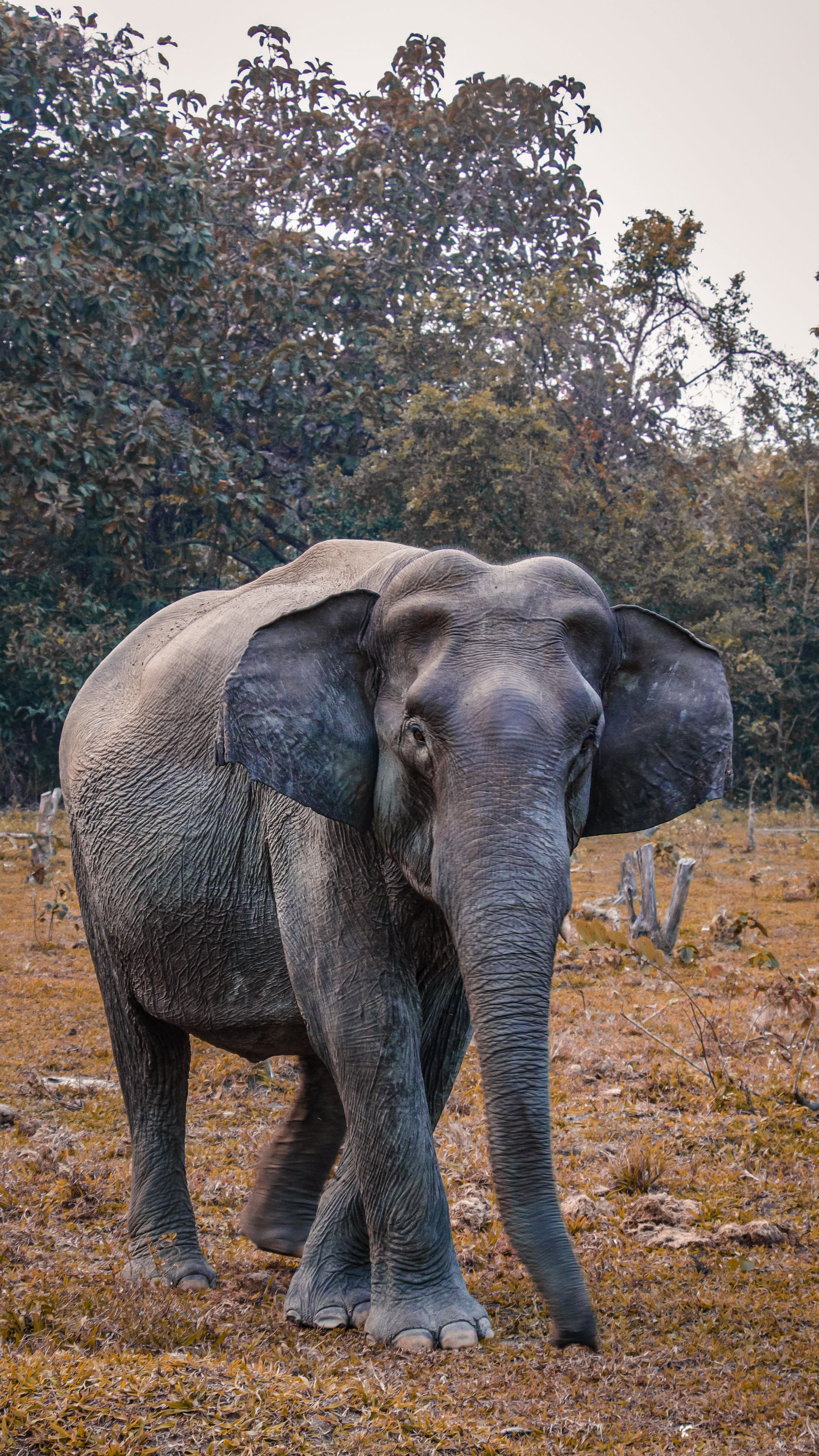 Elephant In The Savannah Premium Lightroom Presets For Wildlife Photography In 2020 Nature Photography Animals Elephants Photos Wildlife Photography
