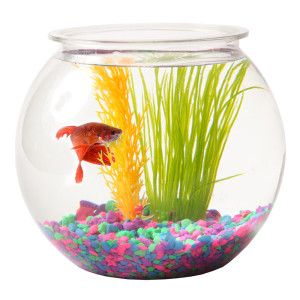 Grreat Choice 5 Gallon Fish Bowl Aquariums Petsmart Fish Bowl Pet Bowls Aqua Accents