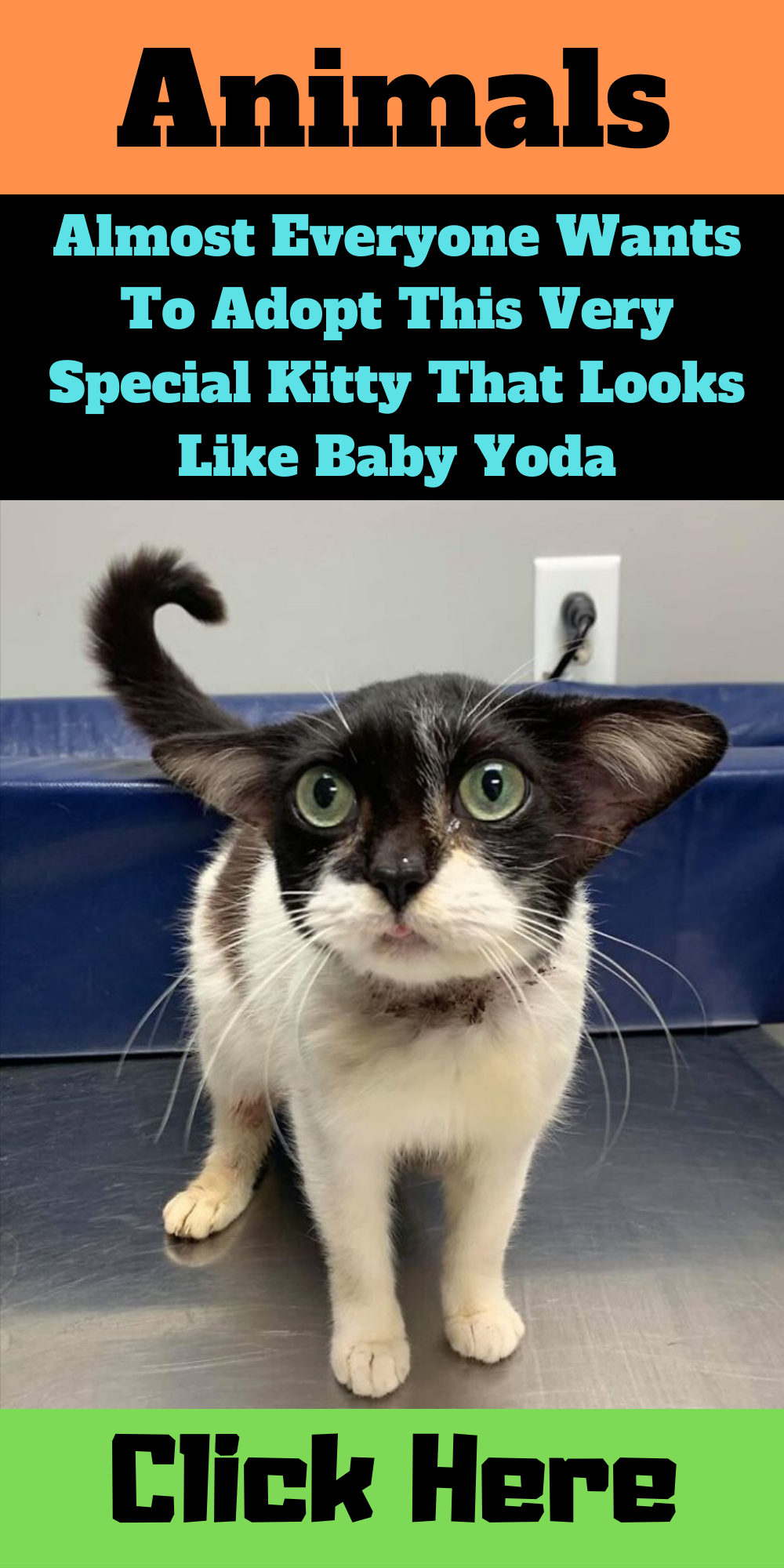 Almost Everyone Wants To Adopt This Very Special Kitty