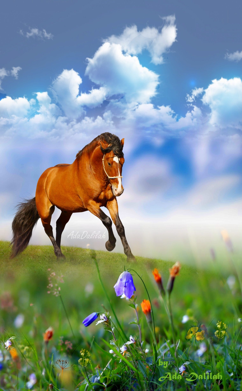 Pin By Ada Dalilah On Horse Art Creative Montage Nature Animals Animals Beautiful Beautiful Horses