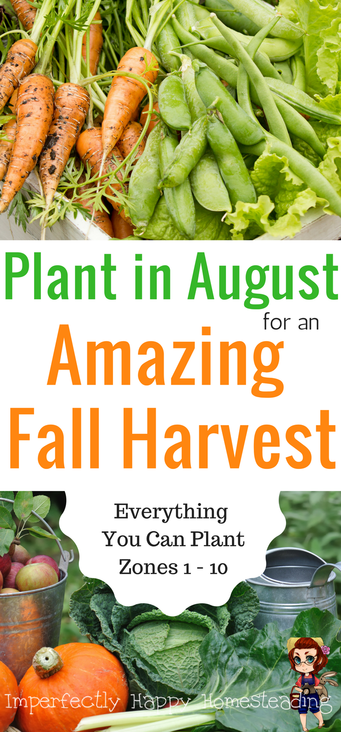 What To Plant In August For An Awesome Fall Garden With Images