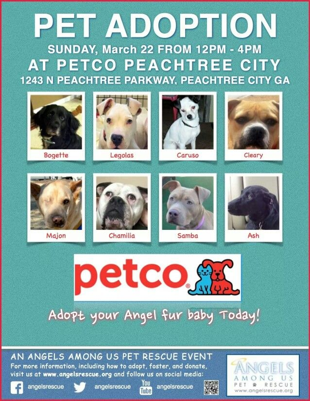 Peachtree City Adoptions On Sunday Petco Adoption Pet Adoption