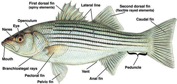 Pin by Sabrina Reber on Florida | Pinterest | Google images, Fish ...