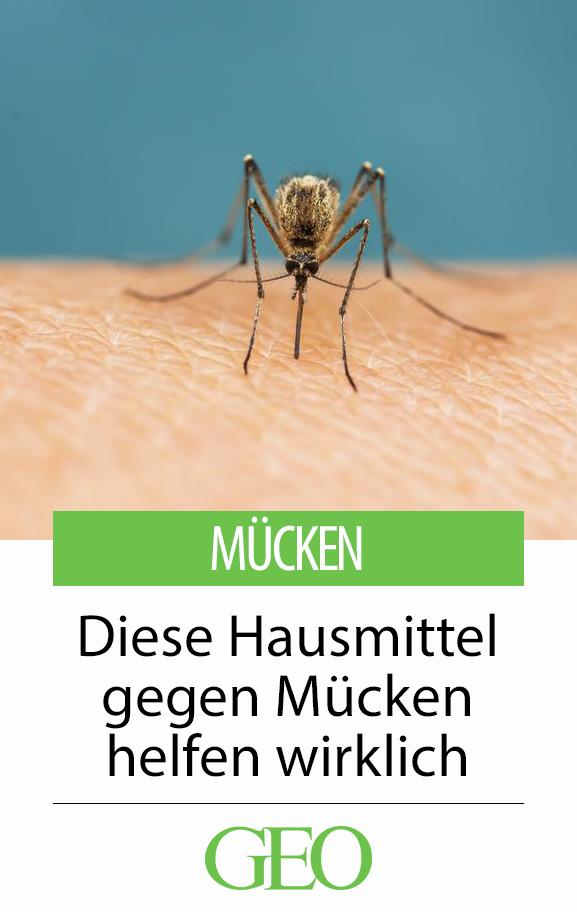 Insekten Diese Hausmittel Gegen Mucken Helfen Wirklich Wir Verraten Ihnen Wirksame Hausmittel Gegen Hausmittel Gegen Mucken Hausmittel Was Hilft Gegen Mucken