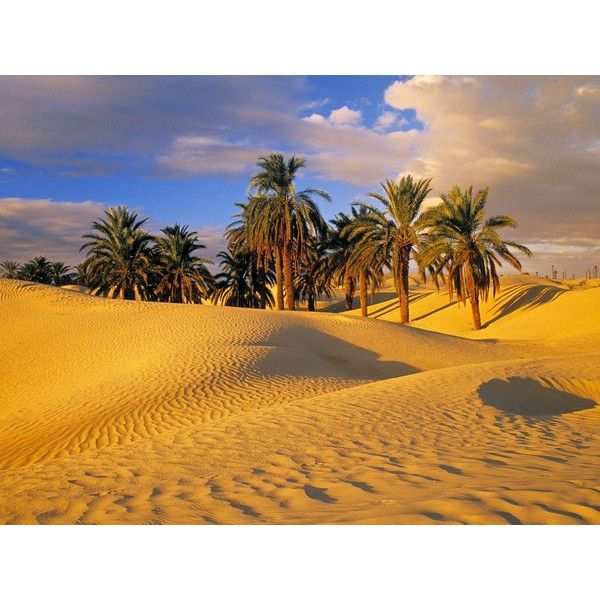 Desert Oasis Wallpaper Nature Wallpapers Free Wallpapers