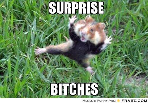 ba4fc31a6c02494334f18693cb296fec surprise kung fu hamster meme generator captionator funny