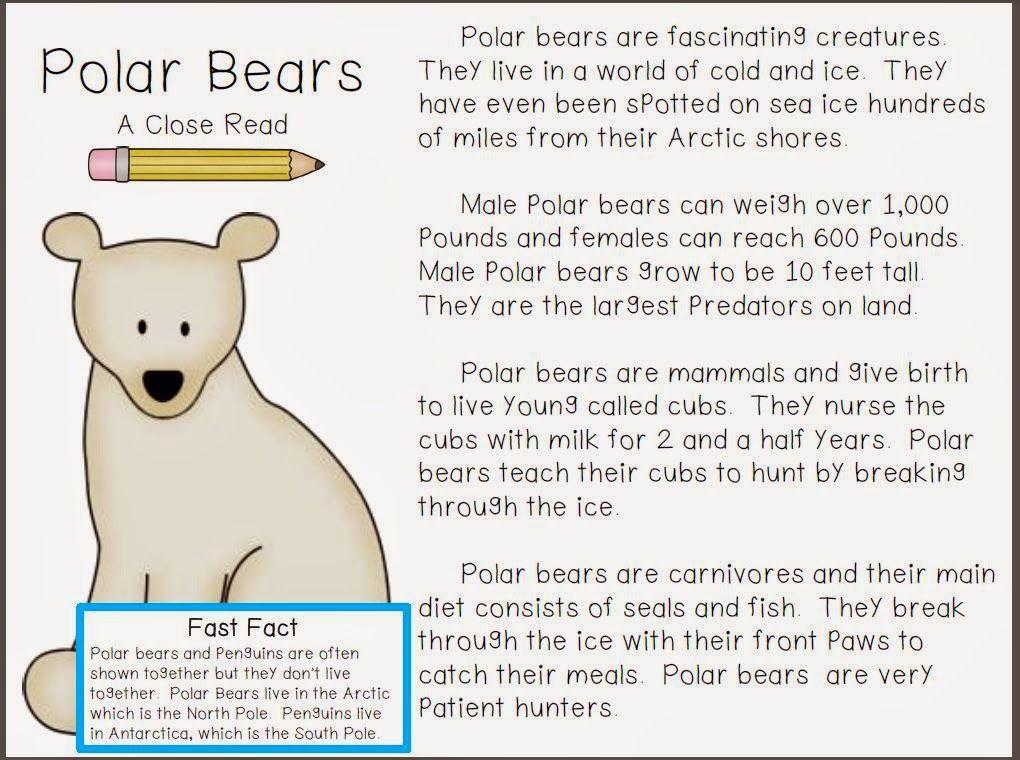 polar bear close read freebie classroom freebies