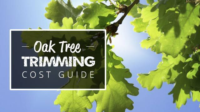 Oak Tree Trimming Cost Guide 2020 (Compare Quotes) + Save ...