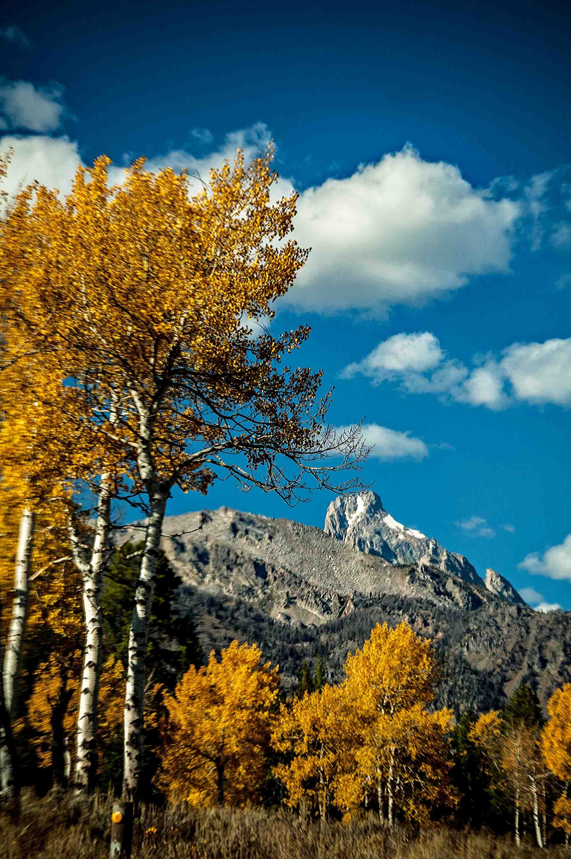 Aspens and the Tetons Tetons, State parks, Natural landmarks