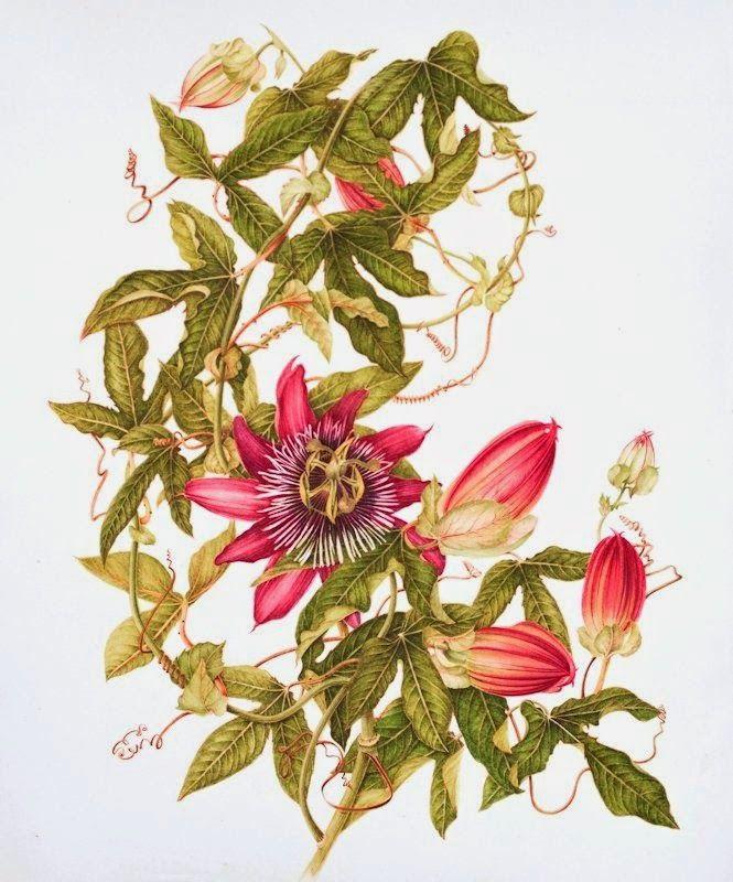 Como me gustan las láminas de botánica Os pueden servir para decorar ...