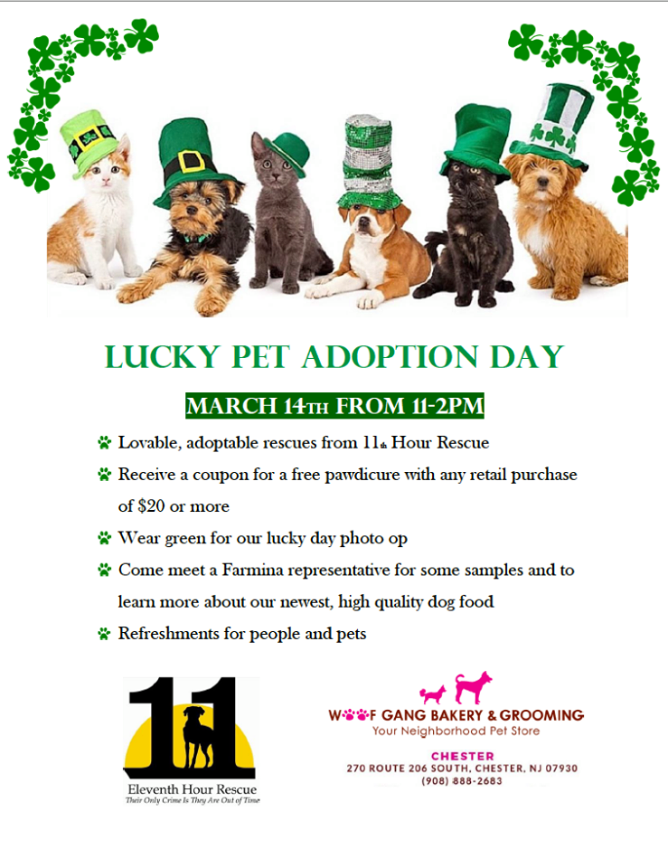 Come Check Out Our Lucky Adoption Event Call Or Stop By Woof Gang Bakery Chester Nj For More Details In 2020 Adoption Day Adoption Pet Adoption
