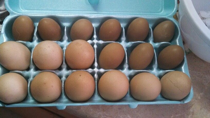 Natural Dyed Earth Tone Easter Eggs. I just used Coffee.