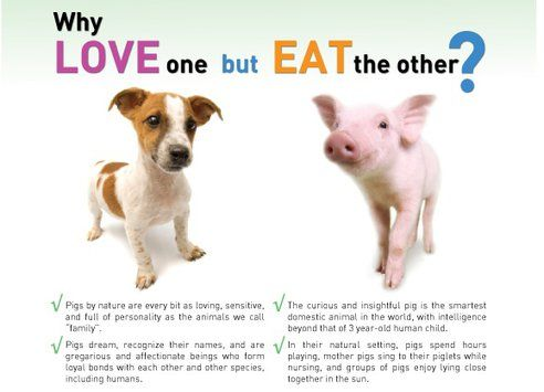 """""""Why Love One But Eat The Other"""" Ads Stir Controversy in Toronto Subway System : TreeHugger"""