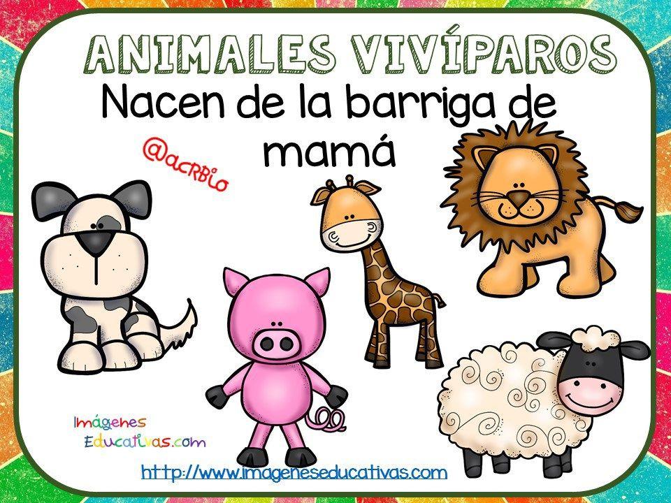 Tipos De Animales Claseficación 8 Viví Paros Y Oviparos
