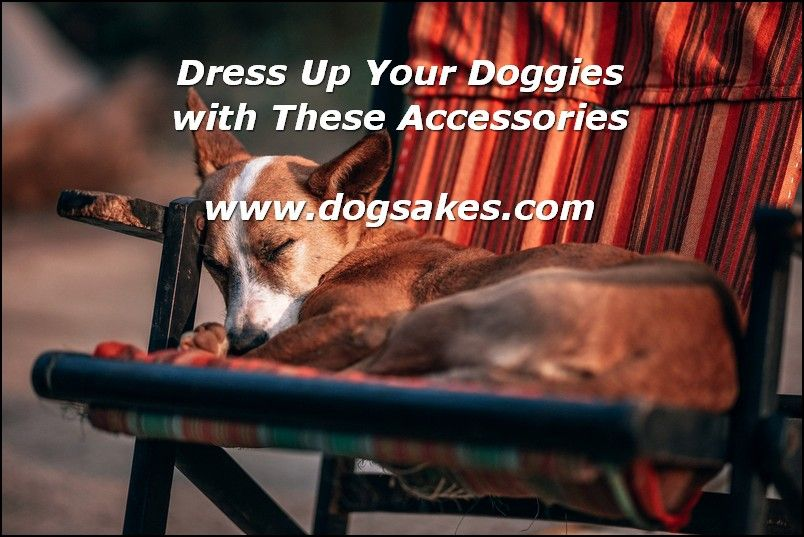Interactive Dog Toys How To Treat Your Dog - Dog Sakes