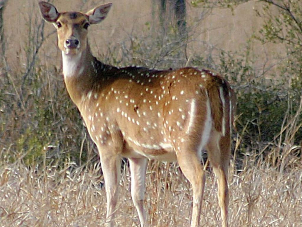 46++ Jungle deer information