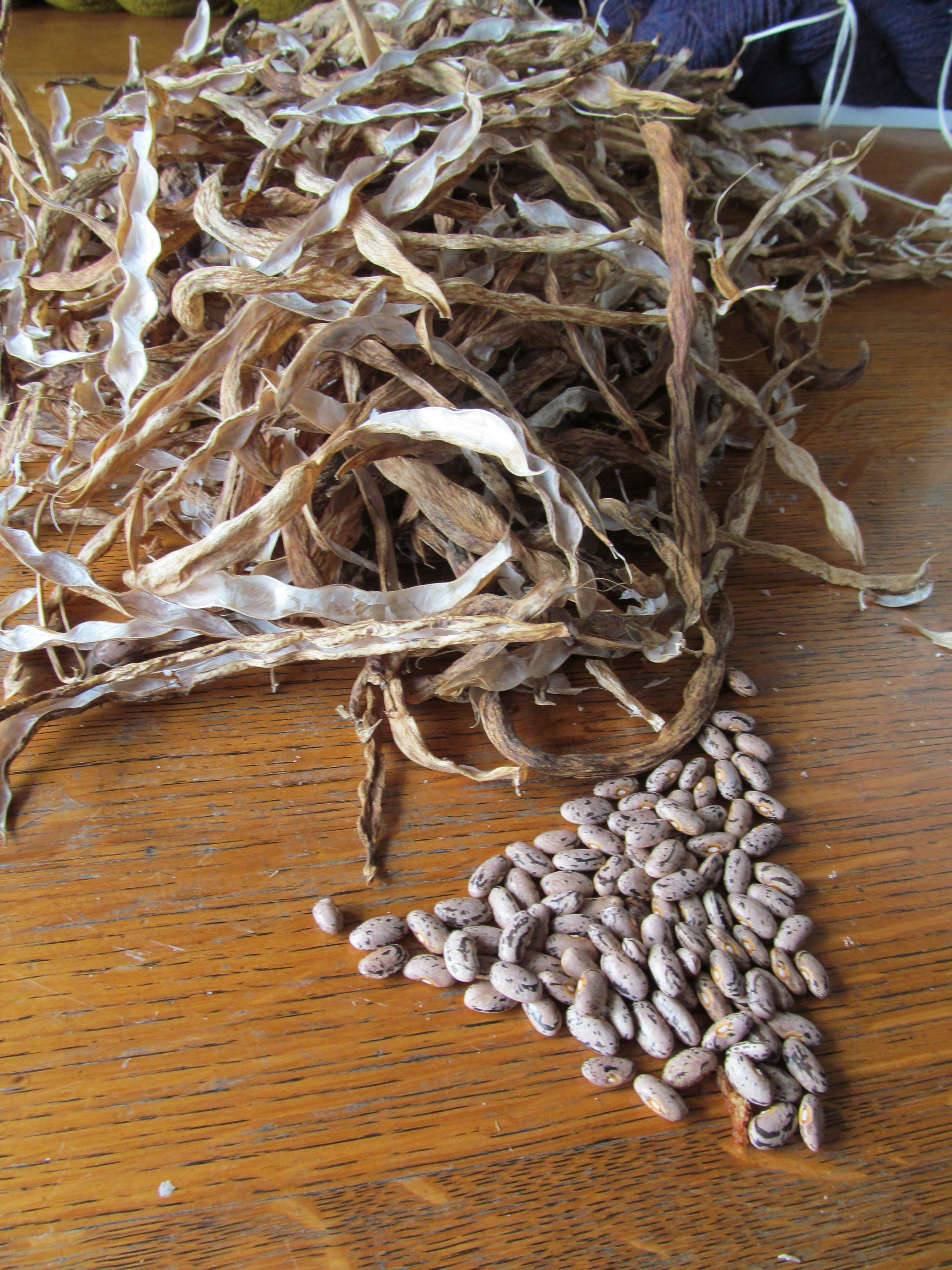 A tiny fraction of the Rattlesnake dry bean crop at Topsy Farms. It ...