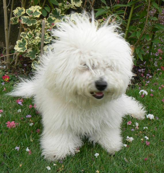 Dog Messy Toy Backyard