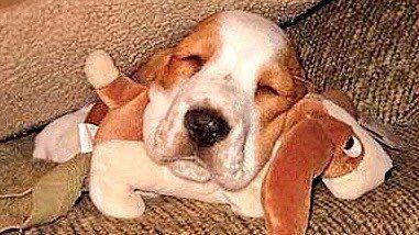 DEBRA GIFFORD (@lovemyyorkie14) | Twitter  Goodnight everyone I'm out