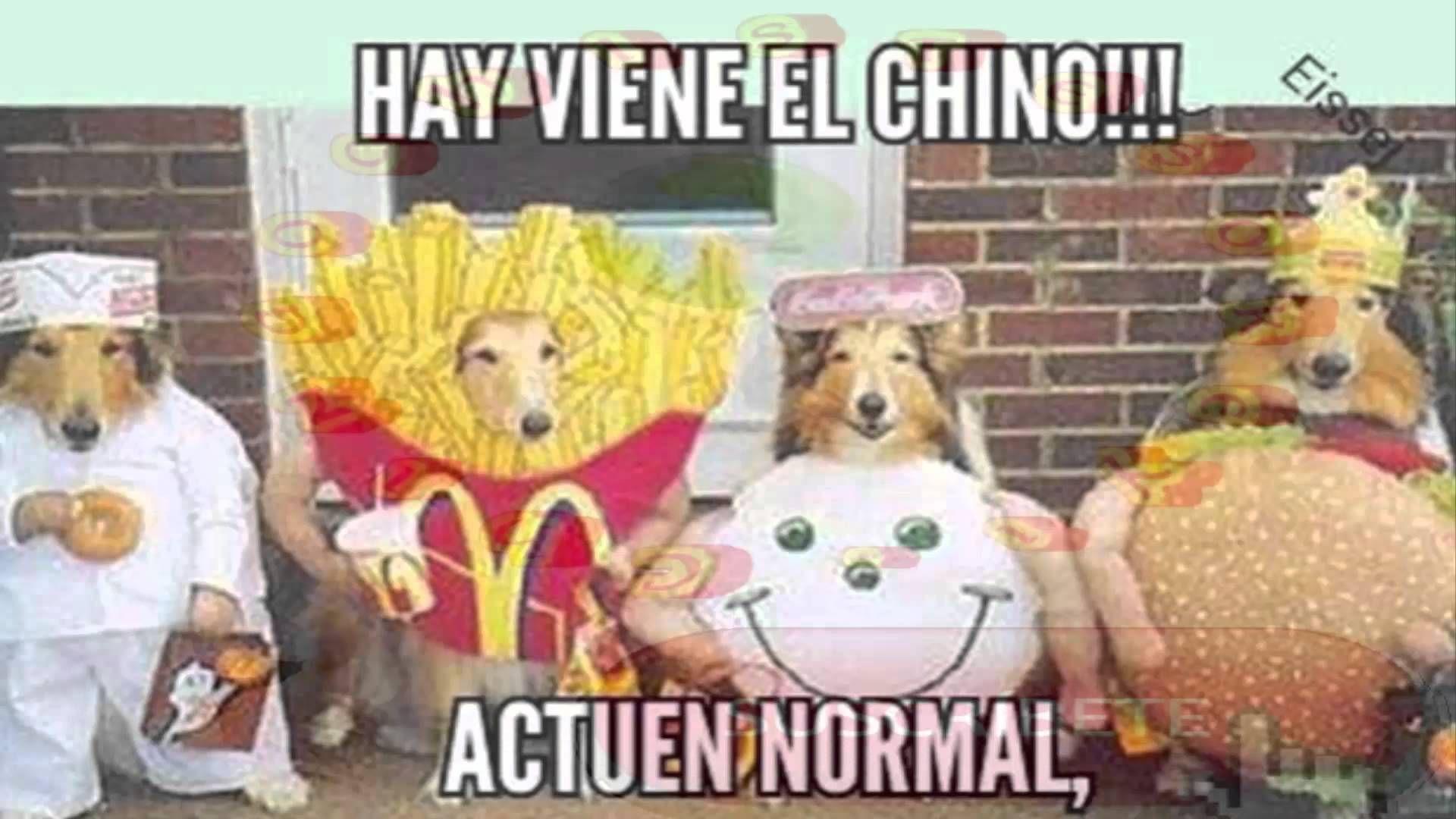 Comida China De Perro En Mexicali Memes De Perros Chihuahua Restaurantes De Comida China Perros