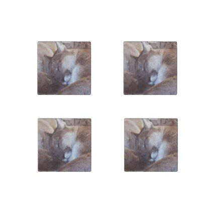 Mountain Lion Big Cat Cougar Animal Kitty Kitten Stone Magnet - cat cats kitten kitty pet love pussy