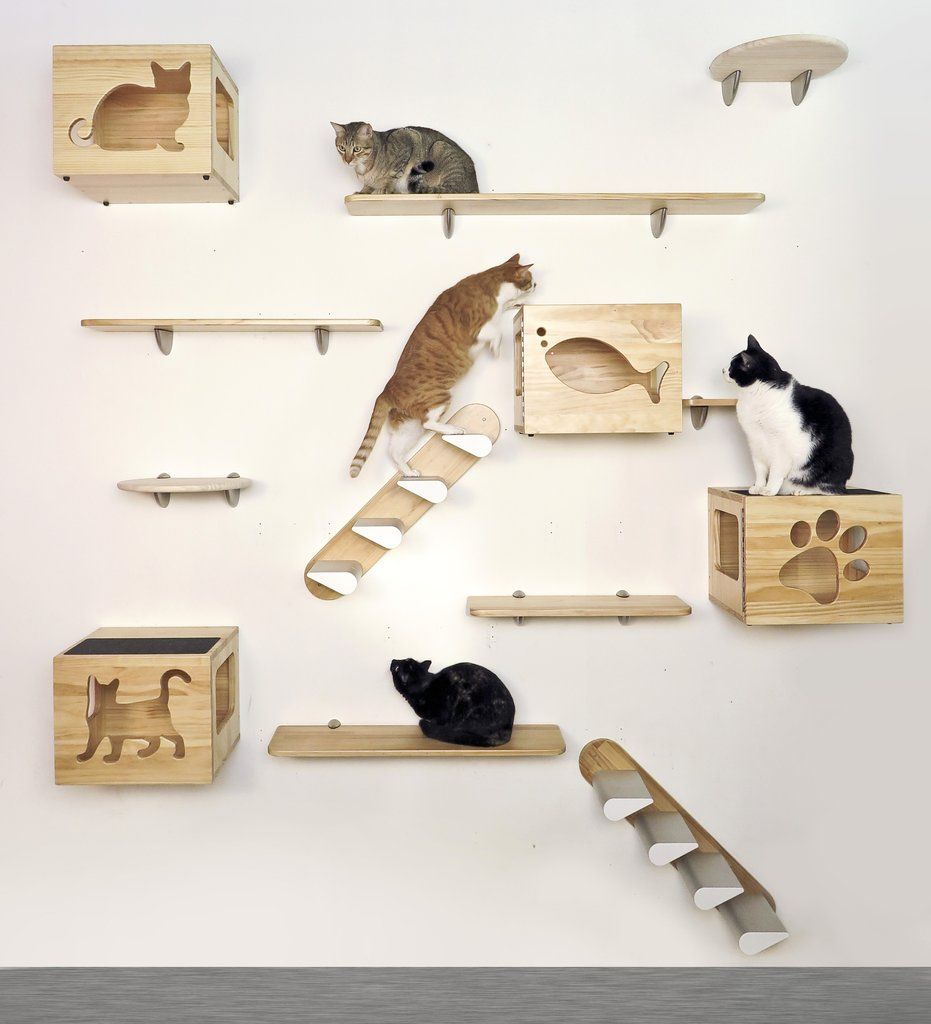 Catsclimber Collection Wall Mount Components Available Individually Animal Room Cat Wall Cat Wall Shelves