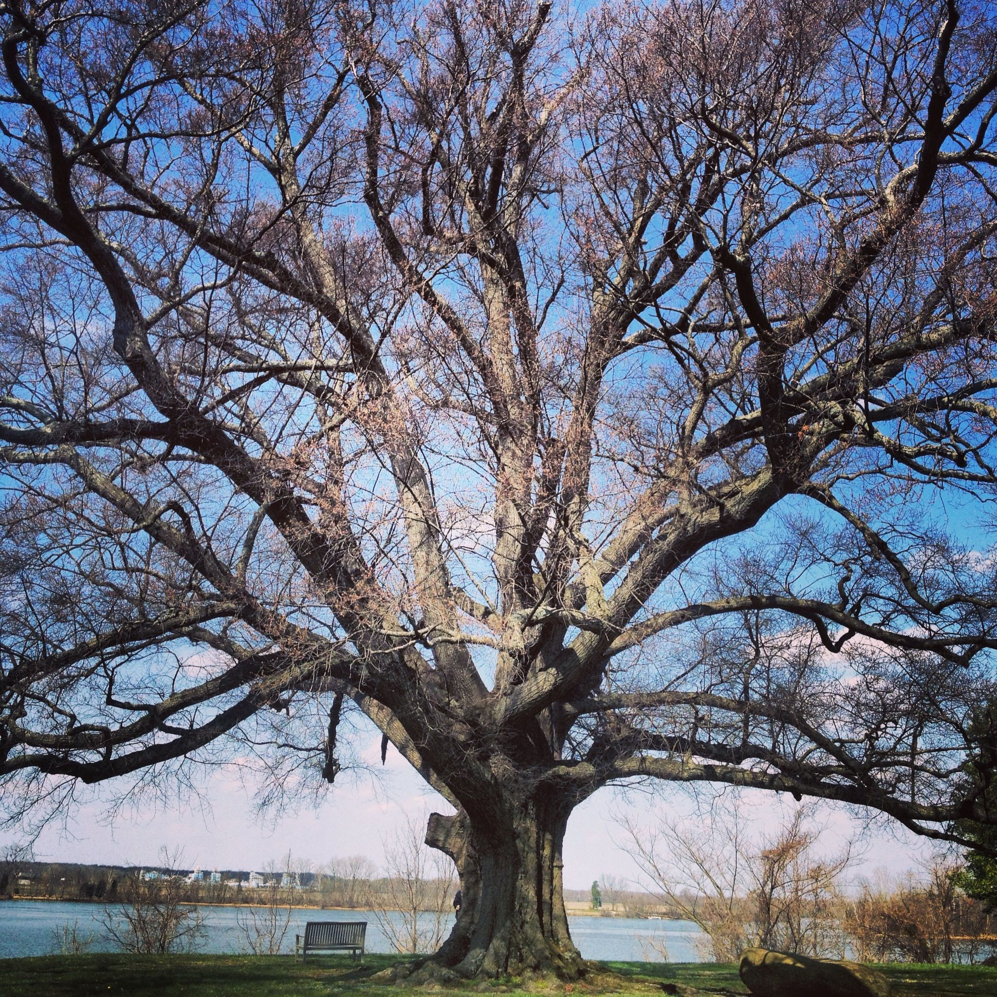 Tree of history Shirley plantation va Virginia, D.C