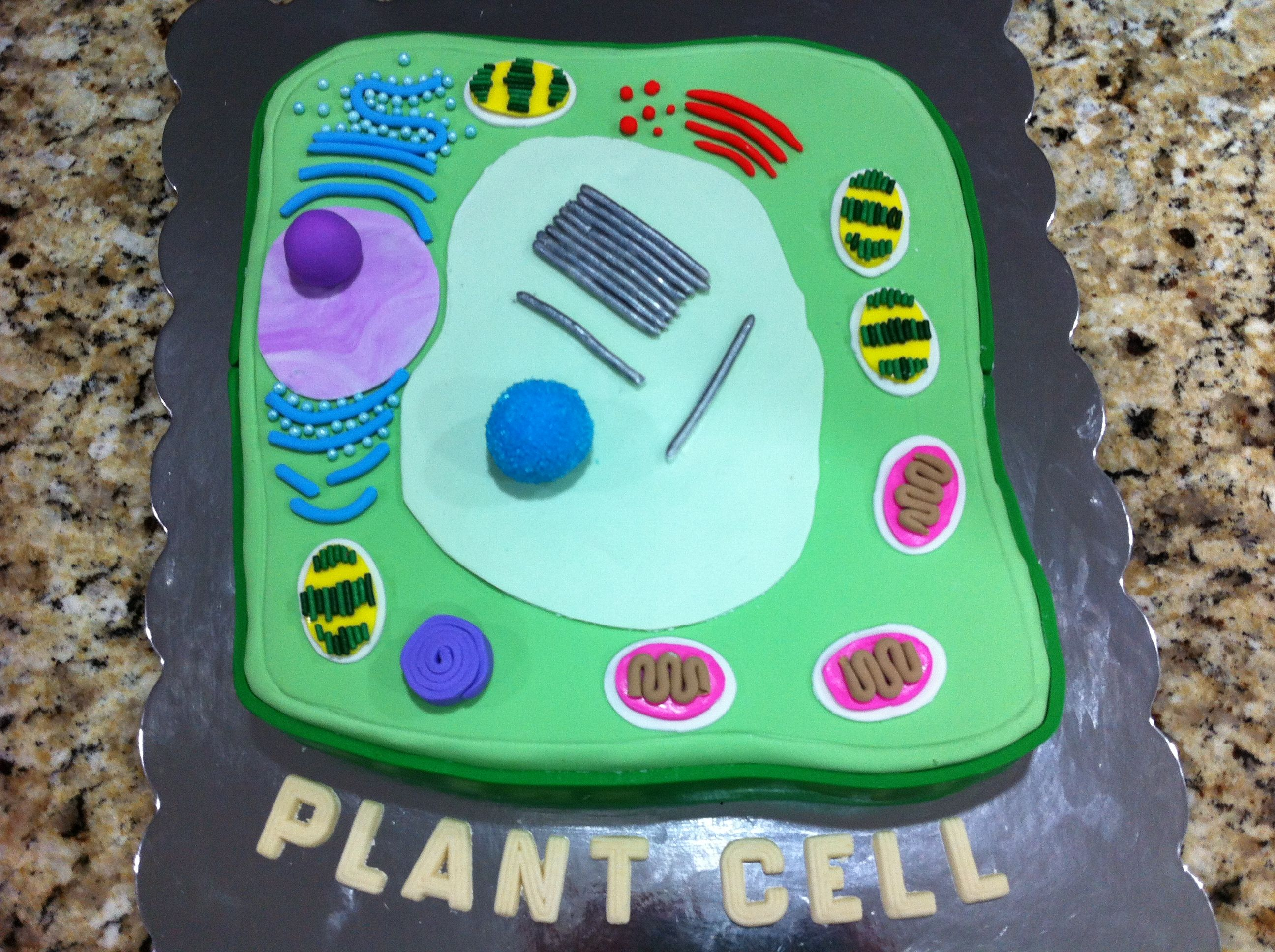 Plant Cell Cake | Plant cell model, Plant cell cake, Cell ...