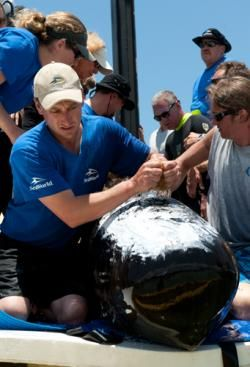 SeaWorld Orlando helps to release a pair of pilot whales off the coast of Key West, Fla.