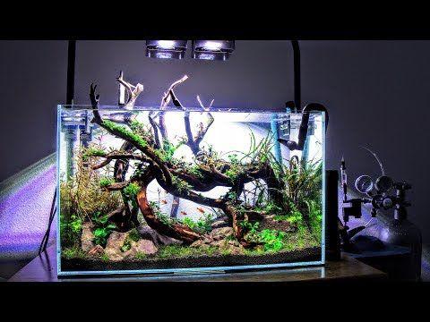 (2) Aquascape Tutorial Guide | Bucephalandra Bog ADA 60P | Aquascaping    YouTube