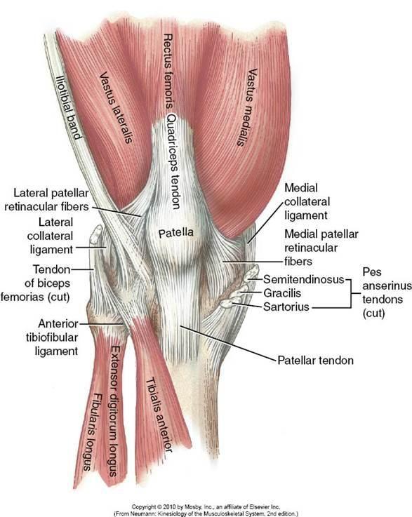 Pin de Sat en anatomia | Pinterest | Anatomía, Medicina y Músculos