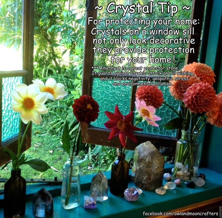 how to get rid of springtails on window sill