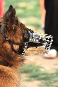 dog bite lawyers los angeles