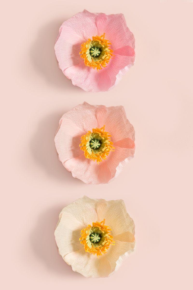 Papaveri Di Carta Crespa diy crepe paper poppy flowers | fiori di carta, rose di