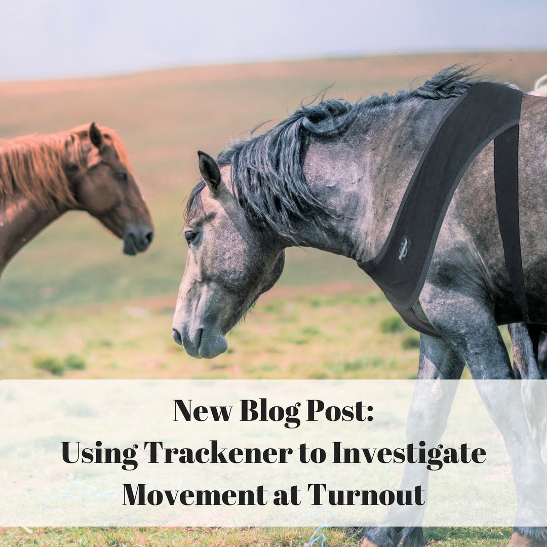 Equine Science Research Student Project Horse Behaviour Turnout Pasture Size Field Length Of Turnout Horse Health Horse Behavior Horses Horse Health