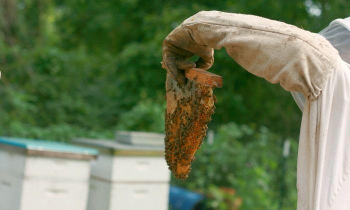 Top Bar Beehives vs Langstroth Beehives   Top bar bee hive ...