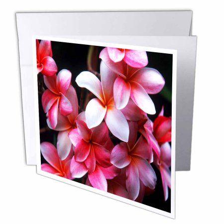 3dRose Hawaiian Fuchsia Colored Plumeria Flowers, Greeting Cards, 6 ...