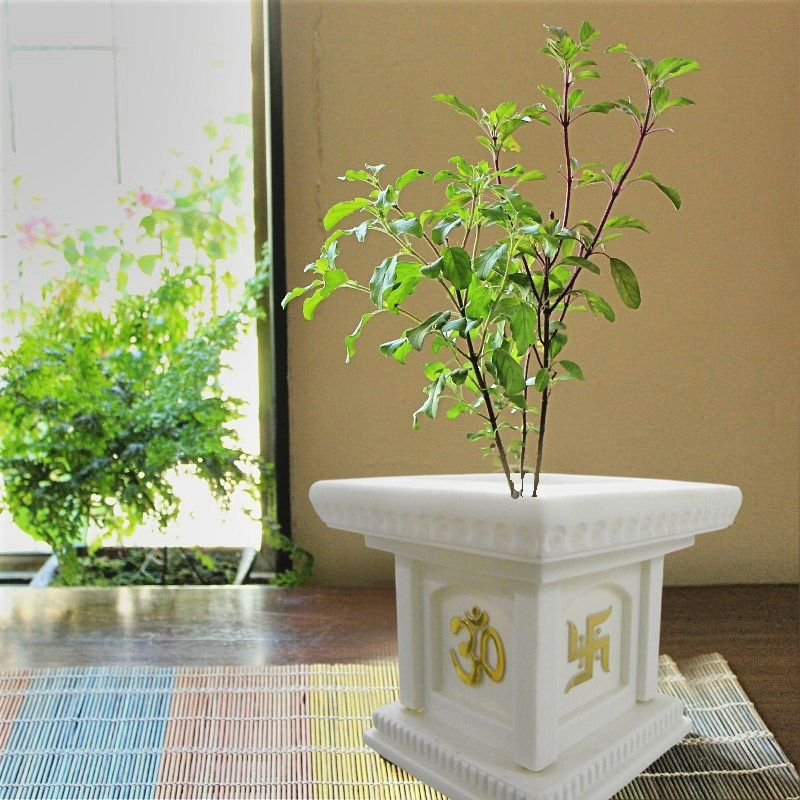 Again A Best Place To Place The #Tulsi Planter In Your