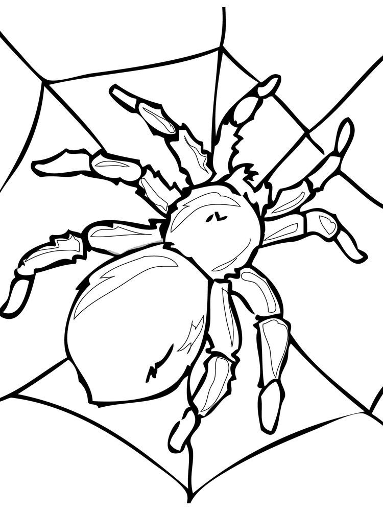 Insects Coloring Pages In 2020 Insect Coloring Pages Spider Coloring Page Bug Coloring Pages