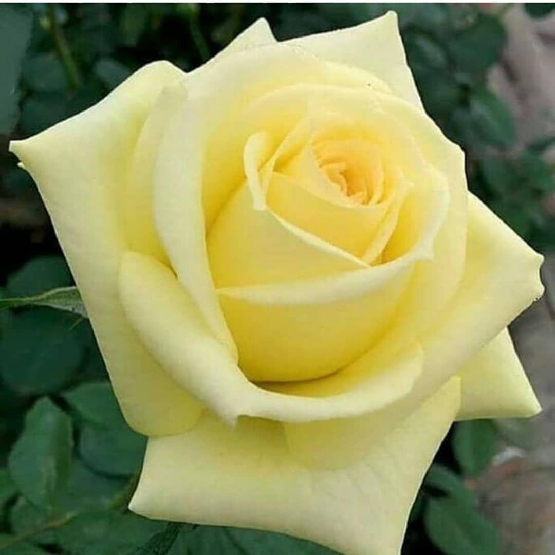 339 mentions J'aime, 5 commentaires - @_flower_heaven__ sur Instagram: «. . . . . . ..#bns_flowers #beautiful #bns_flower #beautifulflower #beautifulflowers #yellowflower…»