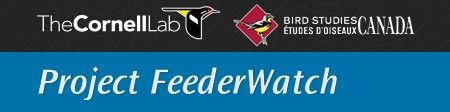 Project FeederWatch is a winter-long survey of birds that visit feeders at backyards, nature centers, community areas, and other locales in North America.FeederWatchers periodically count the birds they see at their feeders from November through early April and send their counts to Project FeederWatch. FeederWatch data help scientists track broadscale movements of winter bird populations and long-term trends in bird distribution and abundance.