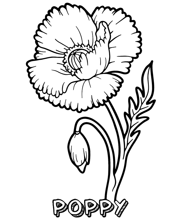 37+ Coloring page of a poppy flower info