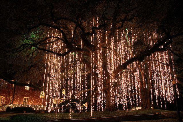White Lights Hanging Like Spanish Moss I Vote For Tree Year Round