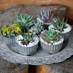 The Plant Recipe Book Succulents Gift Making Ideas Pinterest