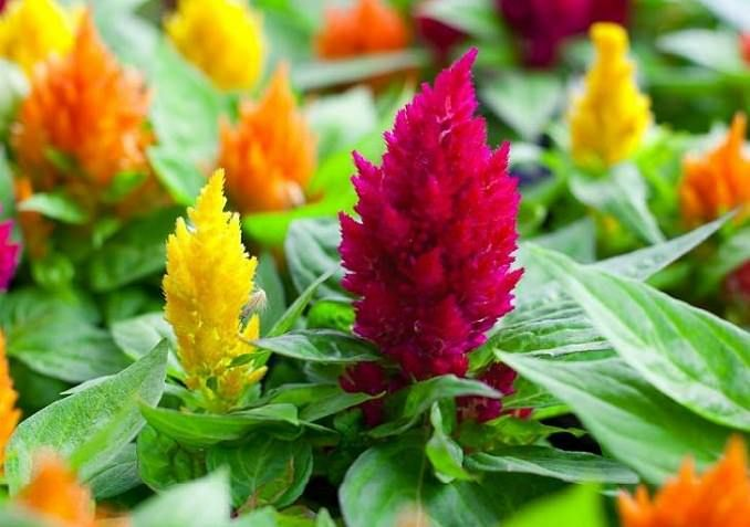 22 Best Flowers For Full Sun Heat Tolerant Flowers For Containers Heat Tolerant Flowers Full Sun Flowers Flower Care