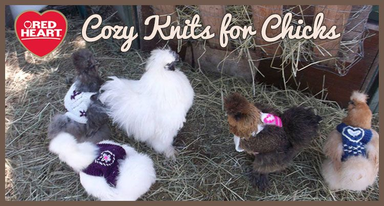Read an interview about a chicken sweater designer, and get two free ...