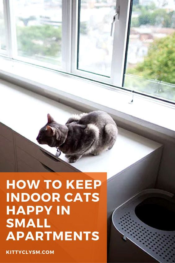 How to Keep Indoor Cats Happy in Small Apartments | Indoor ...