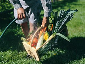 Our Garden Hod is the ultimate harvesting basket!  Wash and clean your vegetables while in the basket.  The wood frame and heavy duty wire mesh is made to last a lifetime.  MADE IN THE USA!  https://hosstools.com/product/garden-hod/