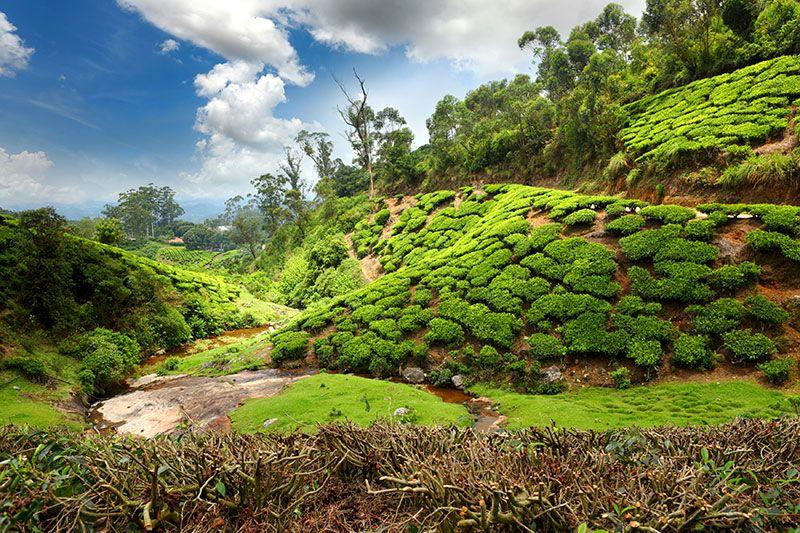 viešbutis (, ) Golf courses, Kerala, Fields